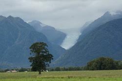 dsc03339-fox-glacier-laat-zich-even-zien