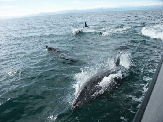 Tussen de dolfijnen